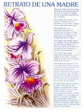 Catalogo para la web Láminas